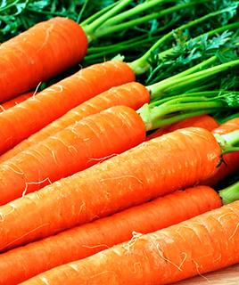 Морковное масло и область его применения